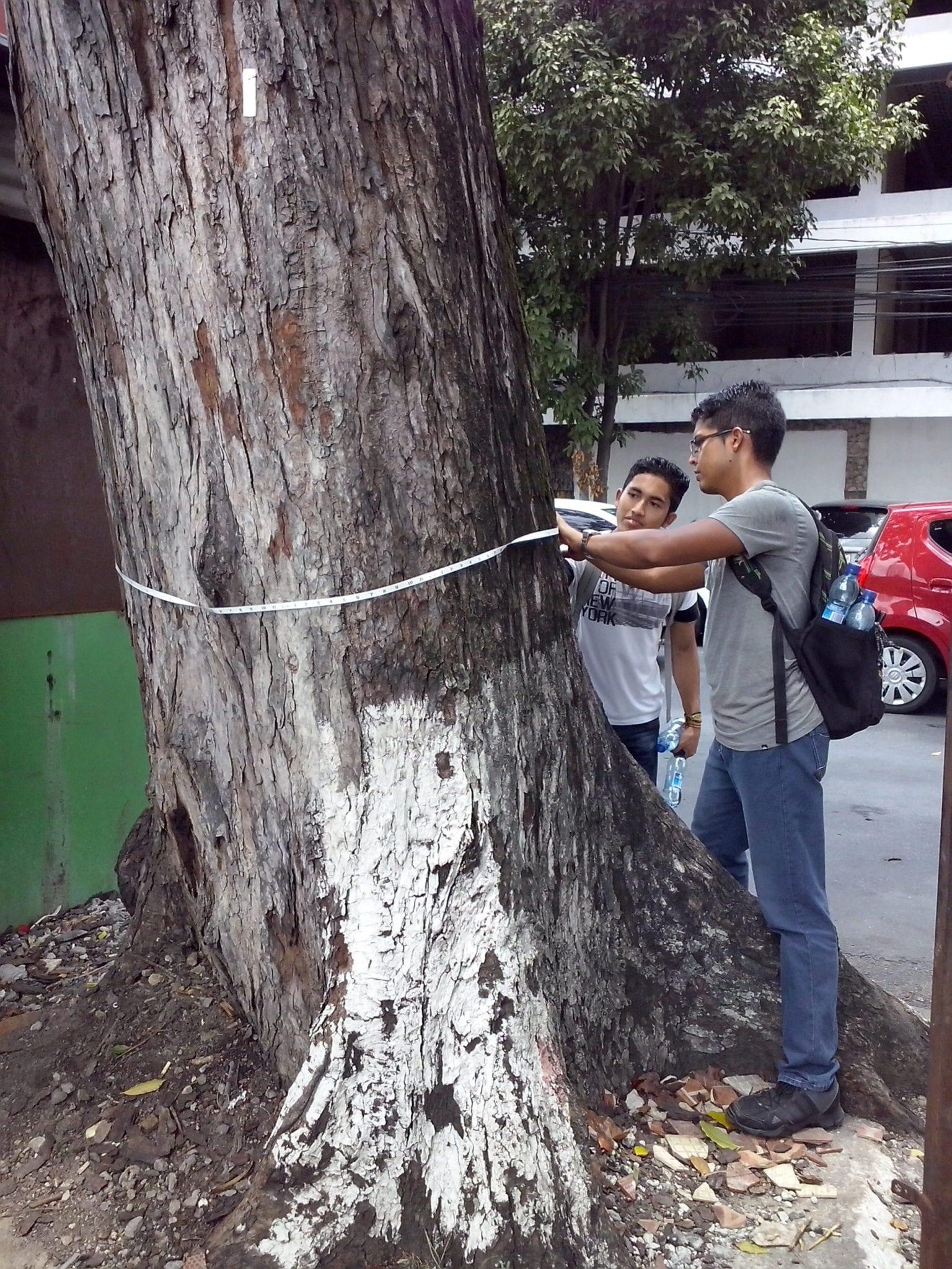 Inventario de Árboles en la Ciudad de Panamá